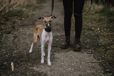 La Fondation Forêt Boucher, en association avec la Ville de Gatineau, lance un projet pilote pour permettre la circulation de chiens en laisse sur les terrains municipaux de la forêt Boucher